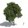 חבילת צמחייה 03<br>  Laubwerk Kit 5