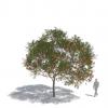 חבילת צמחייה 03<br>  Laubwerk Kit 8
