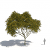 חבילת צמחייה 03<br>  Laubwerk Kit 10