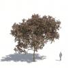 חבילת צמחייה 03<br>  Laubwerk Kit 13
