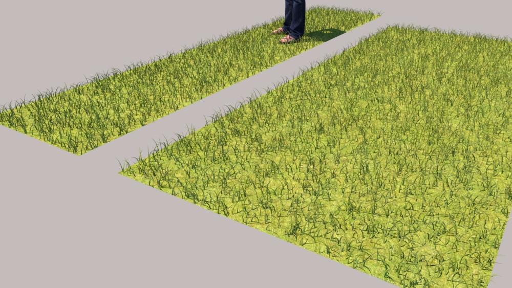 רינדור VRAY FUR GRASS 3