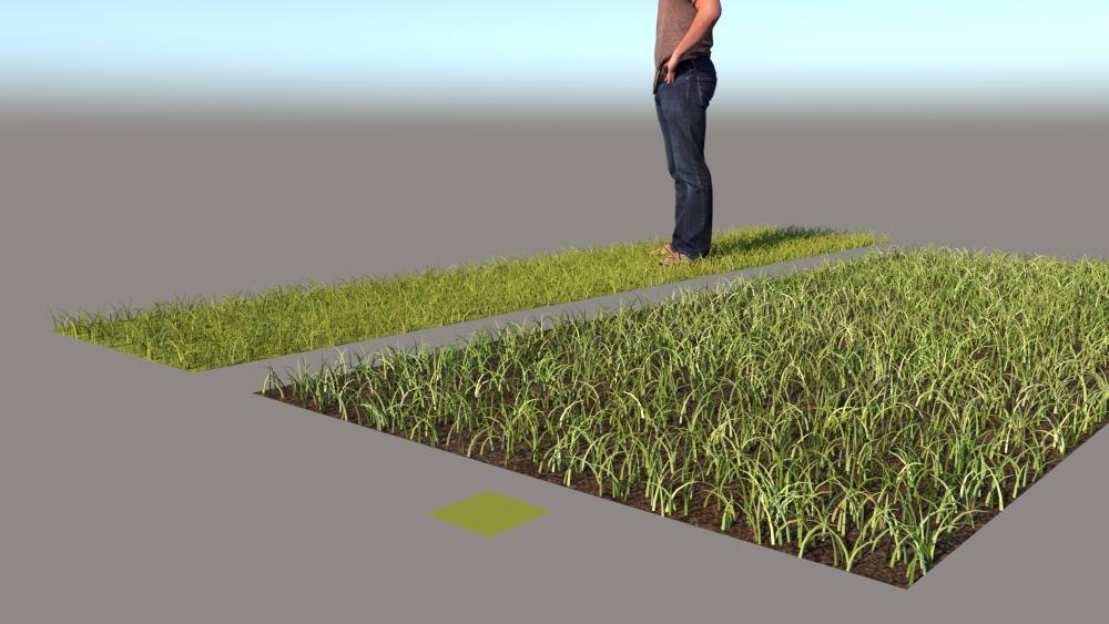 רינדור VRAY FUR GRASS 7